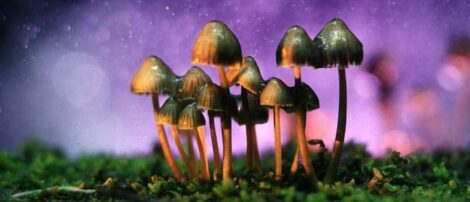 shrooms and alcohol