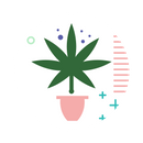 Discovering new strains, edibles, extracts | MOM Canada